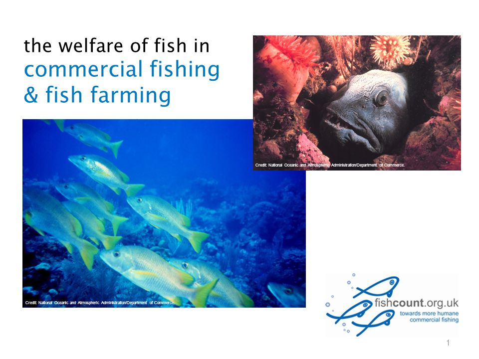 the welfare of fish in commercial fishing & fish farming 1 Credit: National Oceanic and Atmospheric Administration/Department of Commerce.