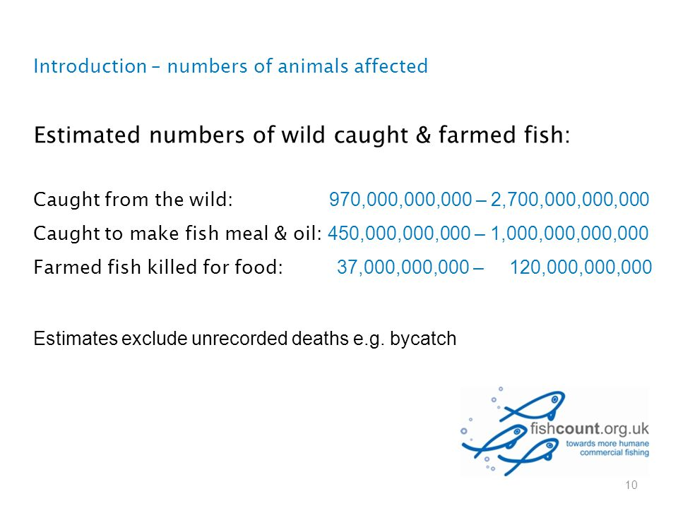 Introduction – numbers of animals affected Estimated numbers of wild caught & farmed fish: Caught from the wild: 970,000,000,000 – 2,700,000,000,000 C