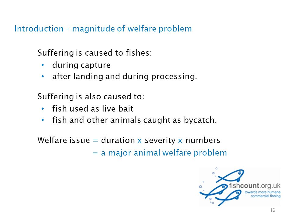 Suffering is caused to fishes: during capture after landing and during processing. Suffering is also caused to: fish used as live bait fish and other