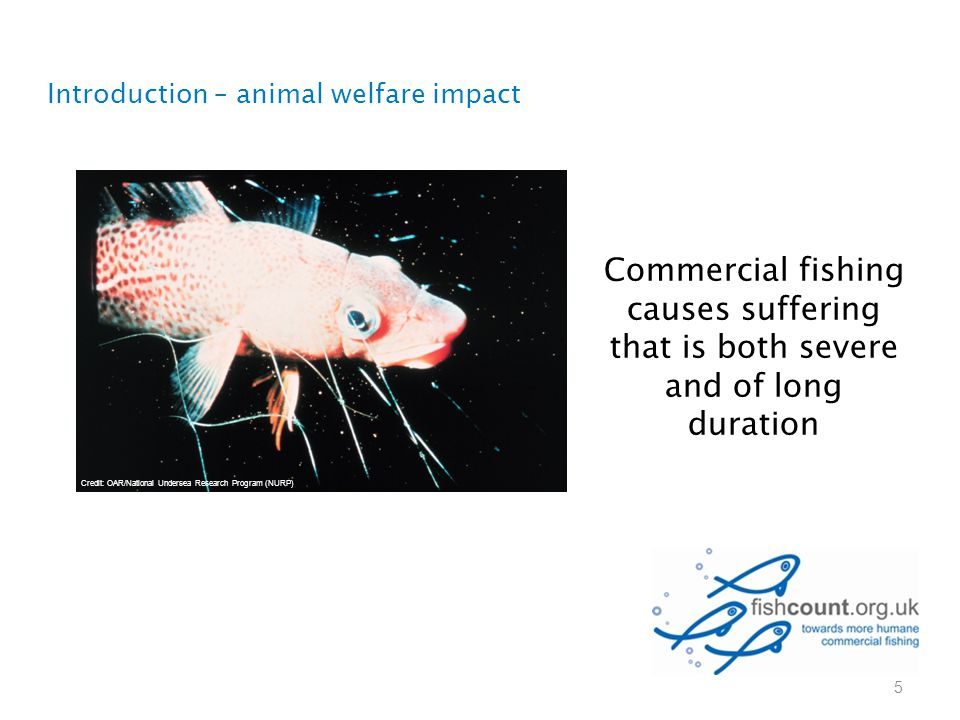 5 Commercial fishing causes suffering that is both severe and of long duration Introduction – animal welfare impact Credit: OAR/National Undersea Rese