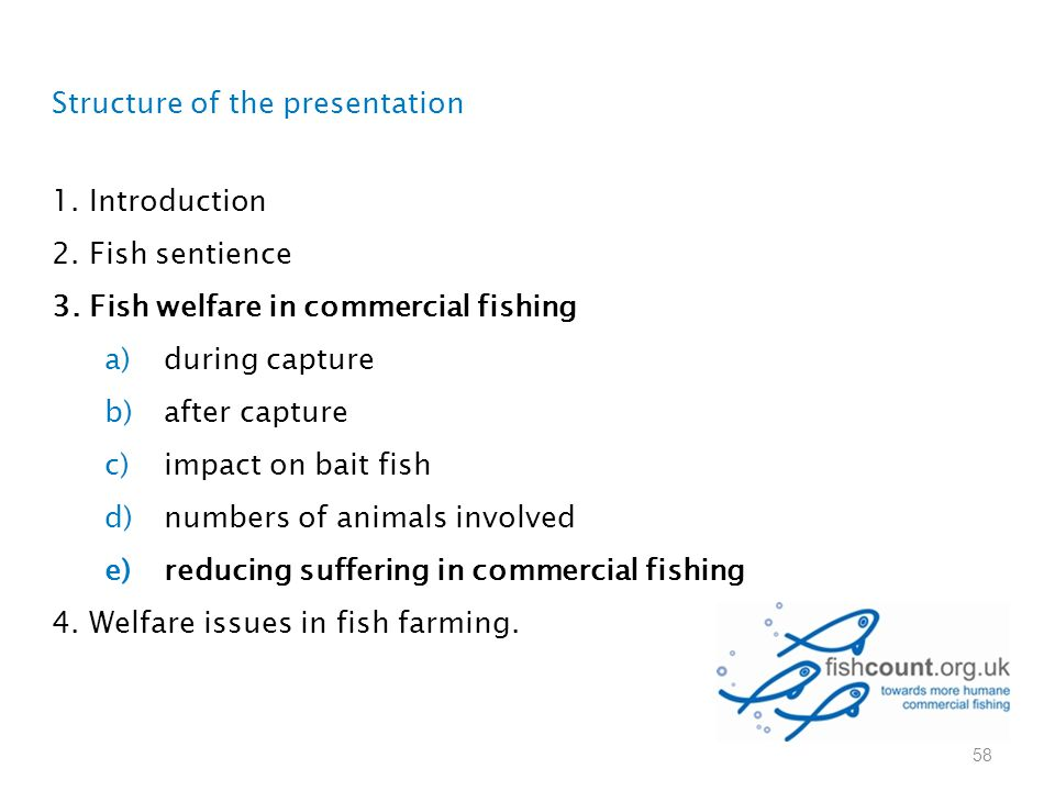 Structure of the presentation 1. Introduction 2. Fish sentience 3. Fish welfare in commercial fishing a)during capture b)after capture c)impact on bai
