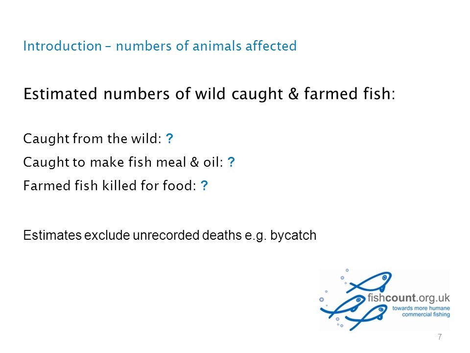 Introduction – numbers of animals affected Estimated numbers of wild caught & farmed fish: Caught from the wild: ? Caught to make fish meal & oil: ? F
