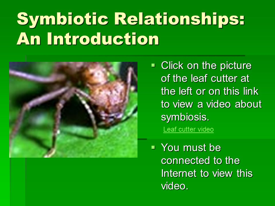 Symbiotic Relationships: An Introduction  Click on the picture of the leaf cutter at the left or on this link to view a video about symbiosis.