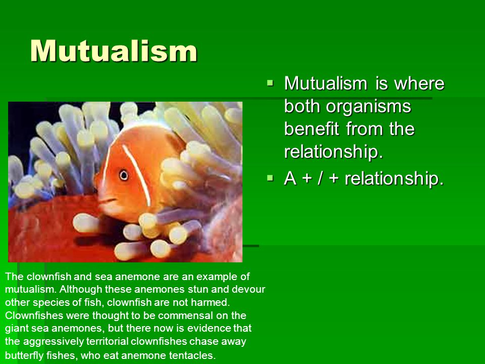 Mutualism  Mutualism is where both organisms benefit from the relationship.