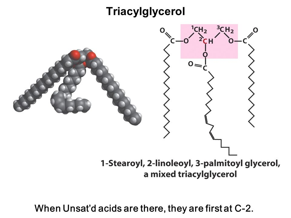 Triacylglycerol When Unsat'd acids are there, they are first at C-2.