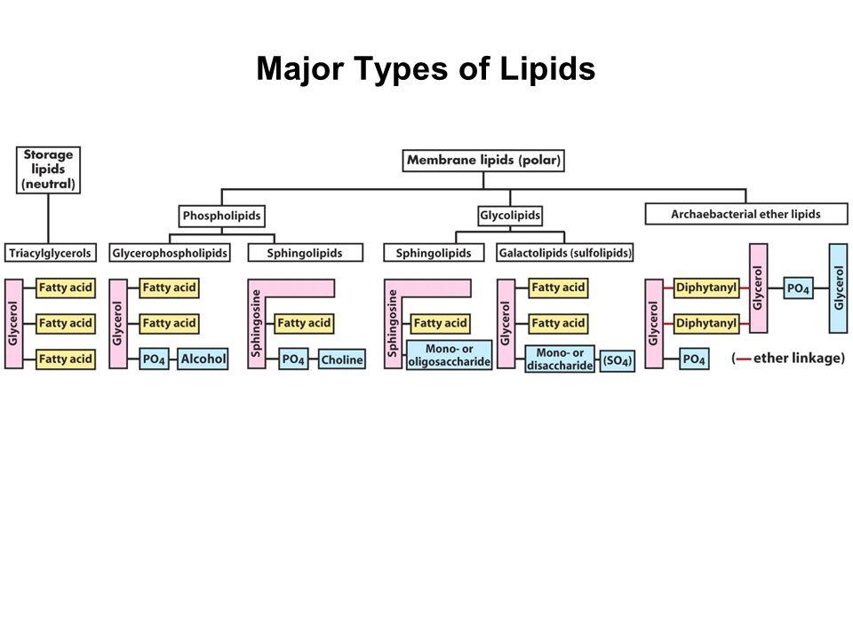 Major Types of Lipids