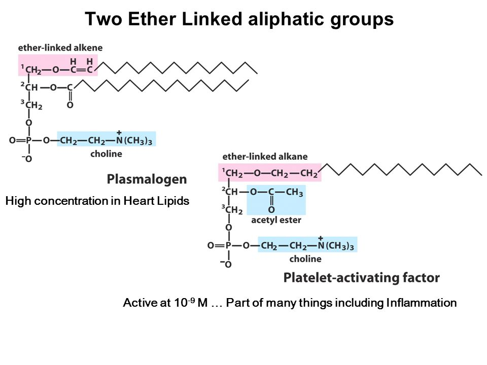 High concentration in Heart Lipids Two Ether Linked aliphatic groups Active at 10 -9 M … Part of many things including Inflammation
