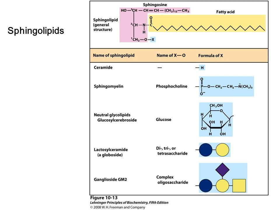 Sphingolipids