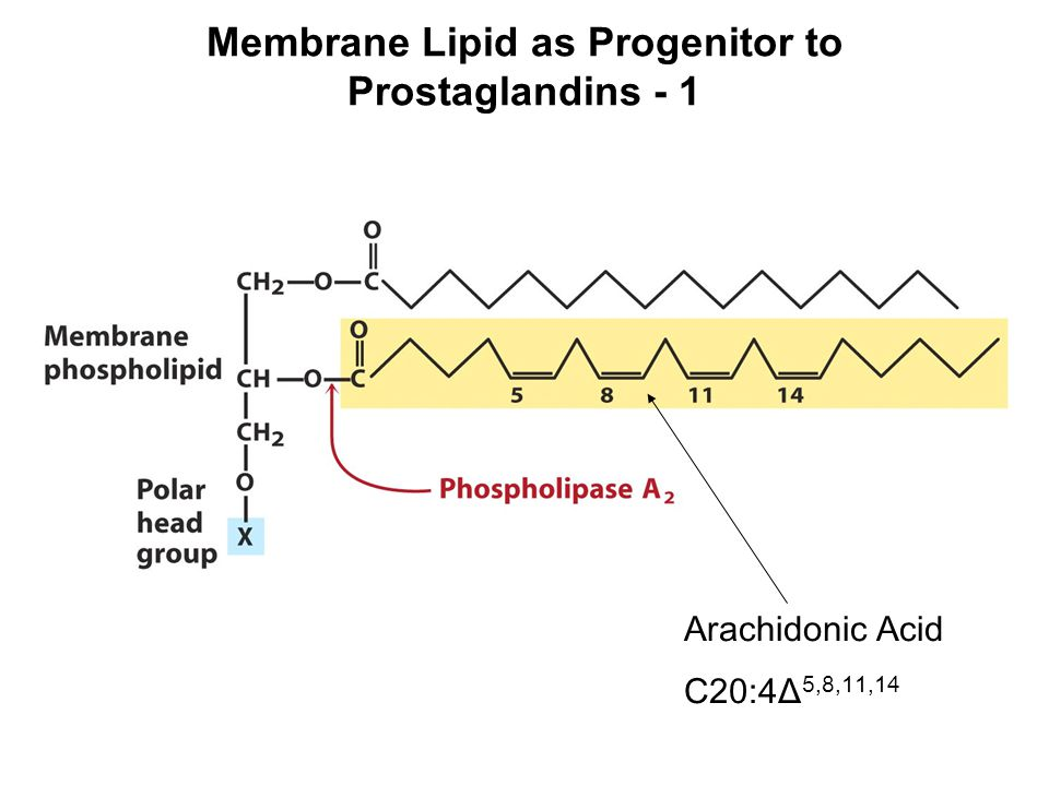 Membrane Lipid as Progenitor to Prostaglandins - 1 Arachidonic Acid C20:4Δ 5,8,11,14