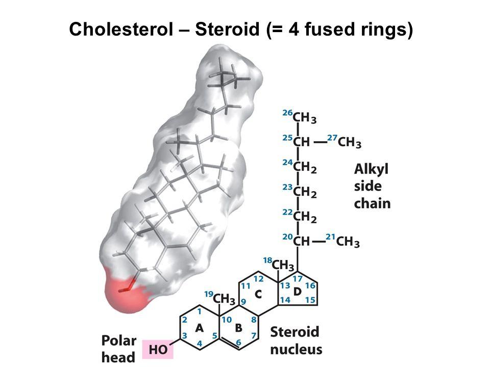 Cholesterol – Steroid (= 4 fused rings)