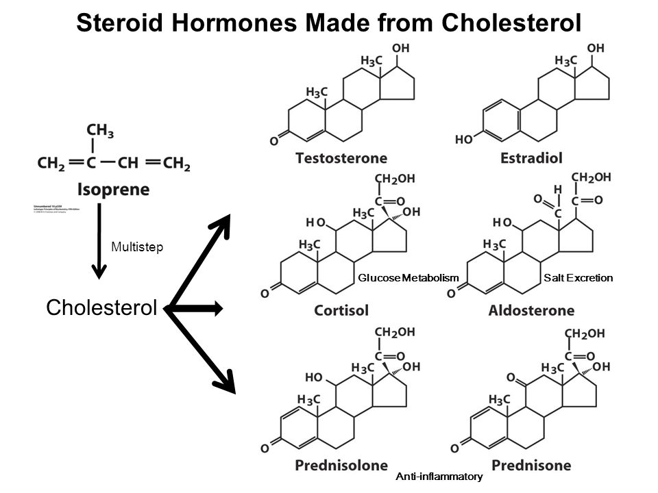 Steroid Hormones Made from Cholesterol Cholesterol Multistep Glucose Metabolism Salt Excretion Anti-inflammatory