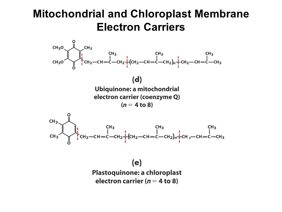 Mitochondrial and Chloroplast Membrane Electron Carriers