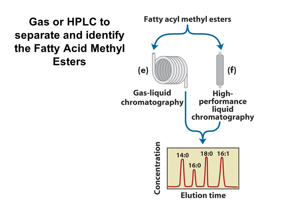 Gas or HPLC to separate and identify the Fatty Acid Methyl Esters