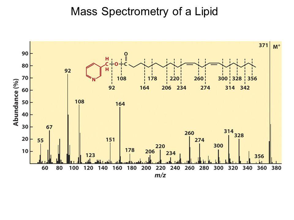 Mass Spectrometry of a Lipid