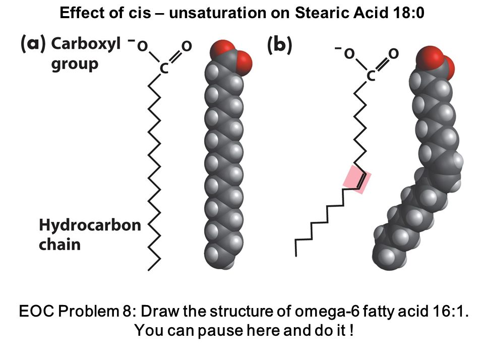 Effect of cis – unsaturation on Stearic Acid 18:0 EOC Problem 8: Draw the structure of omega-6 fatty acid 16:1.