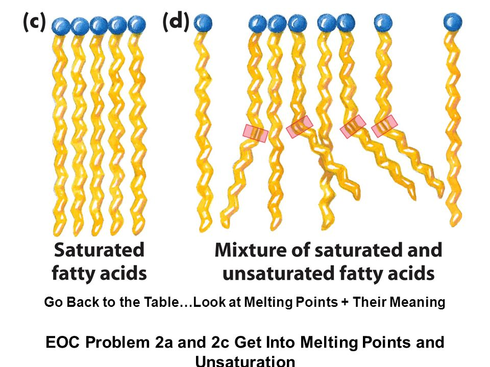 Go Back to the Table…Look at Melting Points + Their Meaning EOC Problem 2a and 2c Get Into Melting Points and Unsaturation