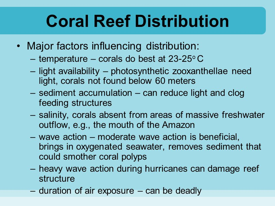 Coral Reef Distribution Major factors influencing distribution: –temperature – corals do best at 23-25 o C –light availability – photosynthetic zooxan