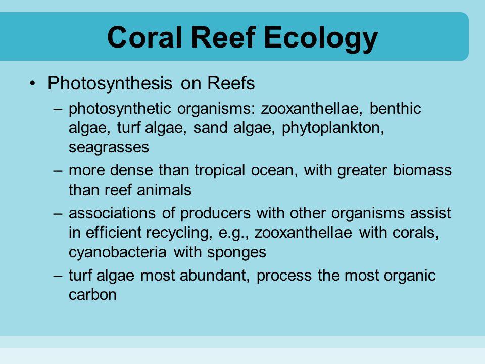 Coral Reef Ecology Photosynthesis on Reefs –photosynthetic organisms: zooxanthellae, benthic algae, turf algae, sand algae, phytoplankton, seagrasses