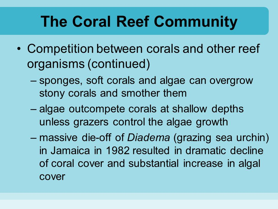 The Coral Reef Community Competition between corals and other reef organisms (continued) –sponges, soft corals and algae can overgrow stony corals and