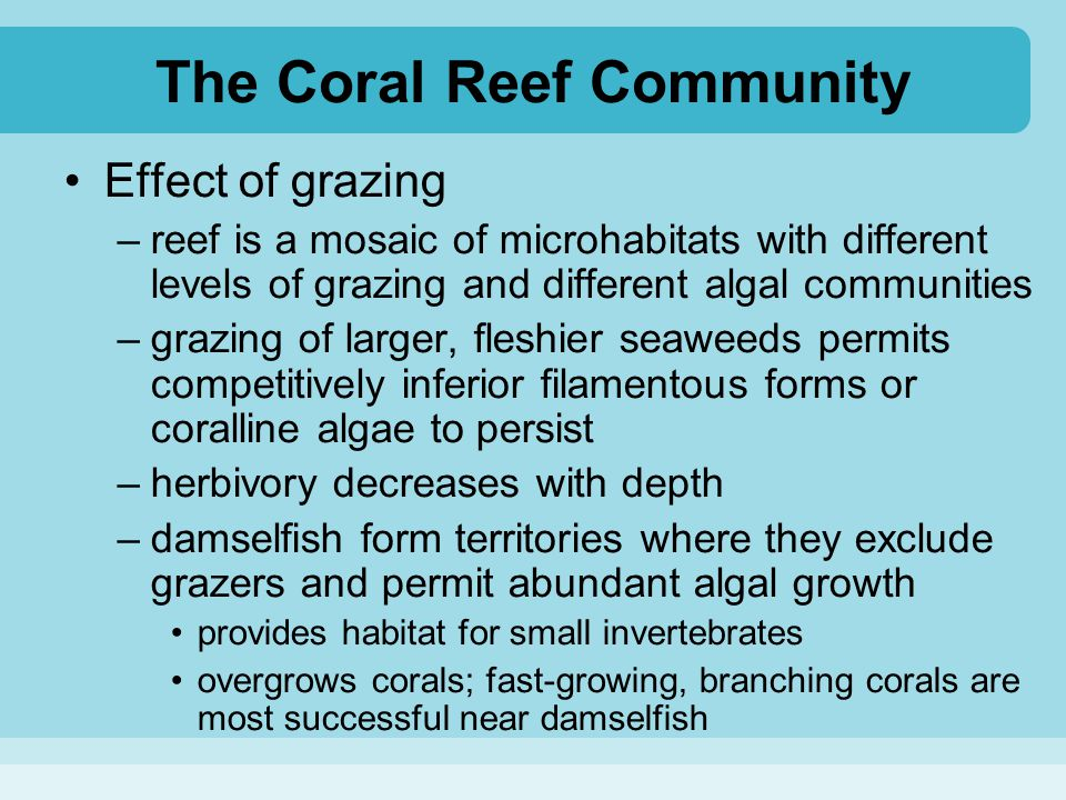The Coral Reef Community Effect of grazing –reef is a mosaic of microhabitats with different levels of grazing and different algal communities –grazin