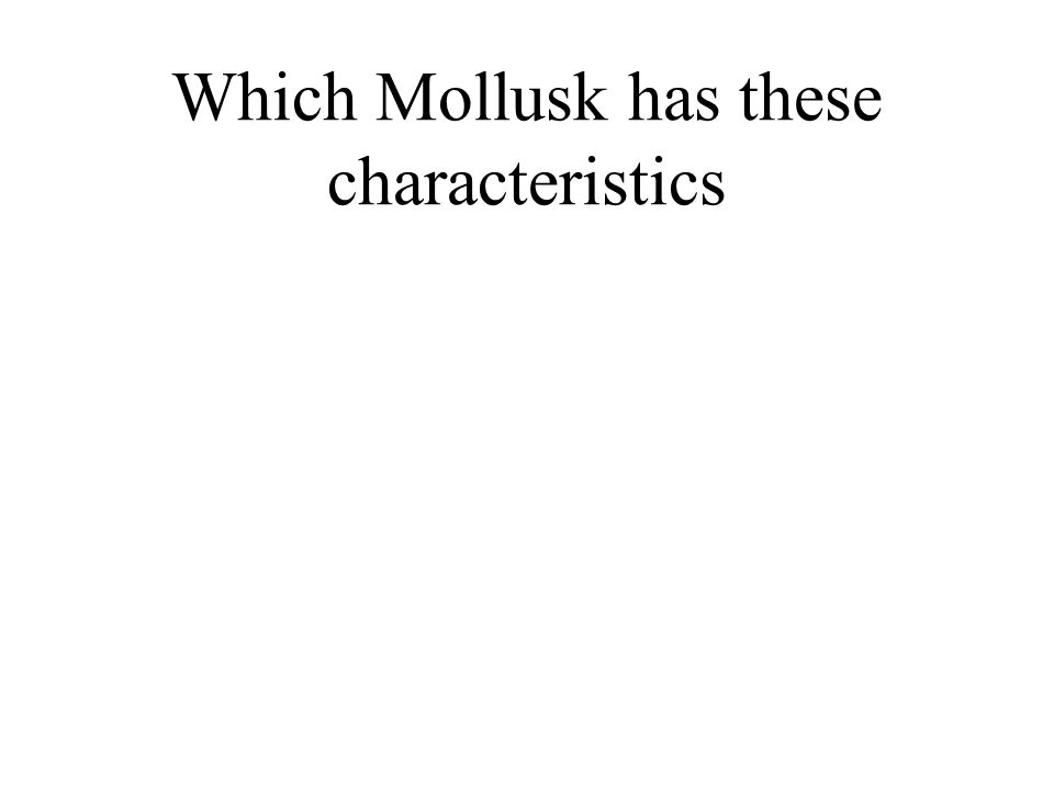 Which Mollusk has these characteristics