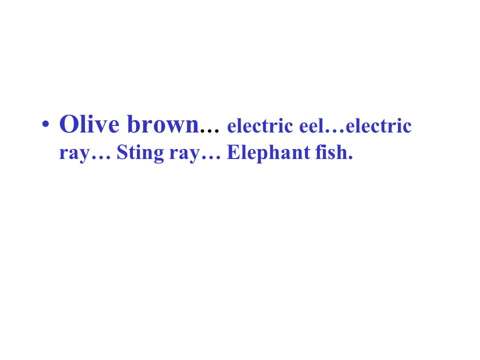 Olive brown … electric eel…electric ray… Sting ray… Elephant fish.