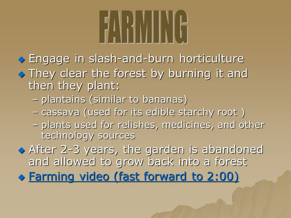  Engage in slash-and-burn horticulture  They clear the forest by burning it and then they plant: –plantains (similar to bananas) –cassava (used for