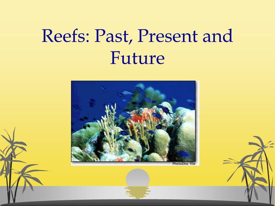 Reefs: Past, Present and Future
