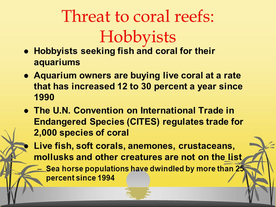 Threat to coral reefs: Hobbyists l Hobbyists seeking fish and coral for their aquariums l Aquarium owners are buying live coral at a rate that has inc