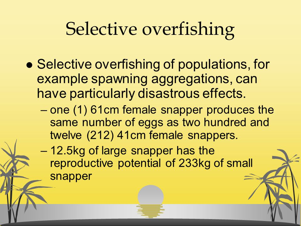 Selective overfishing l Selective overfishing of populations, for example spawning aggregations, can have particularly disastrous effects. –one (1) 61