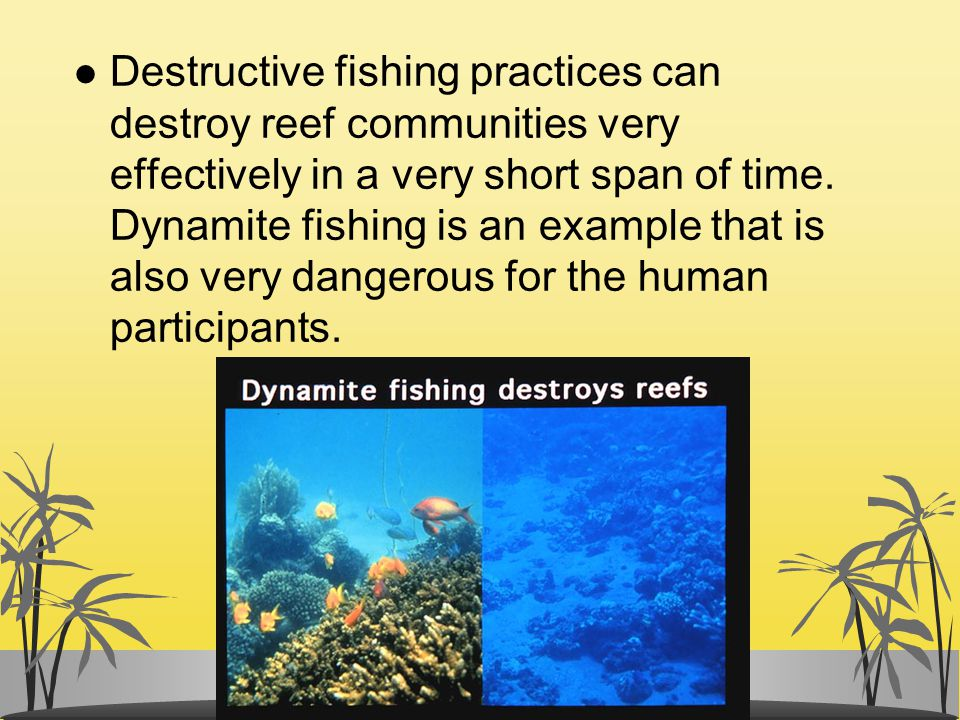 l Destructive fishing practices can destroy reef communities very effectively in a very short span of time. Dynamite fishing is an example that is als