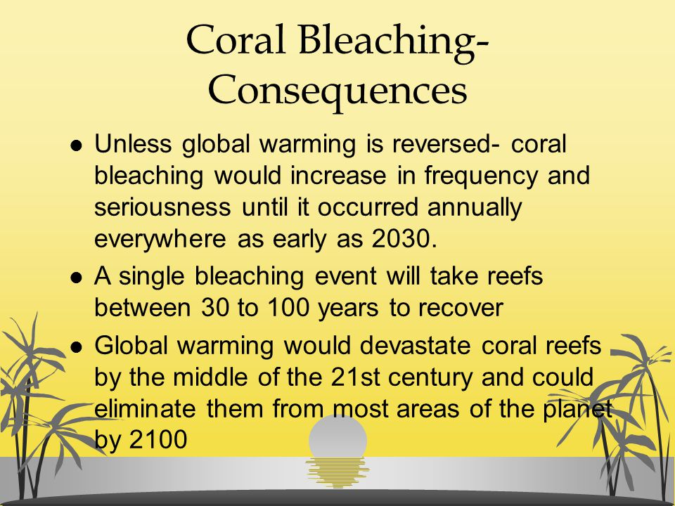 Coral Bleaching- Consequences l Unless global warming is reversed- coral bleaching would increase in frequency and seriousness until it occurred annua