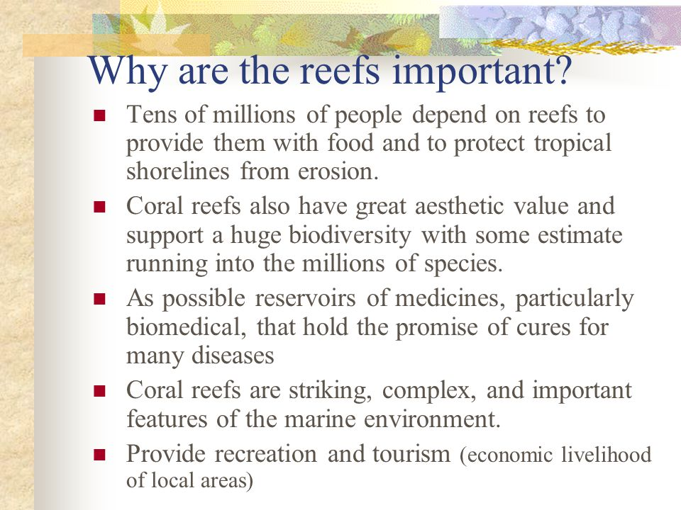 Why are the reefs important.