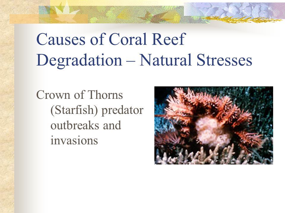 Causes of Coral Reef Degradation – Natural Stresses Crown of Thorns (Starfish) predator outbreaks and invasions