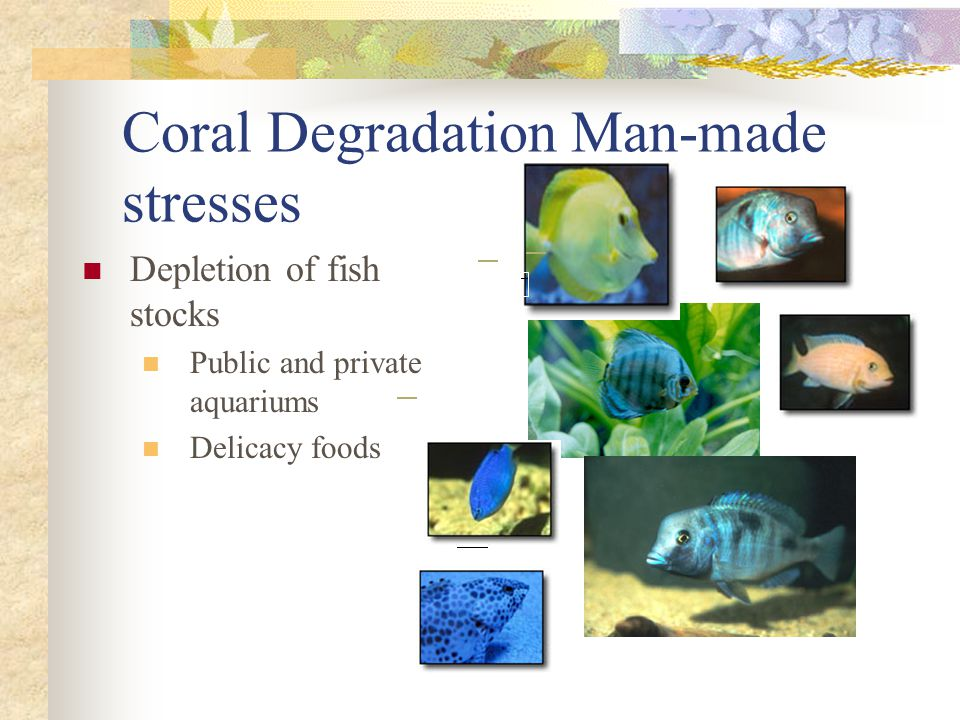 Coral Degradation Man-made stresses Depletion of fish stocks Public and private aquariums Delicacy foods