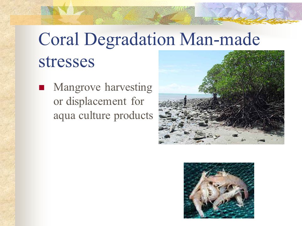 Coral Degradation Man-made stresses Mangrove harvesting or displacement for aqua culture products