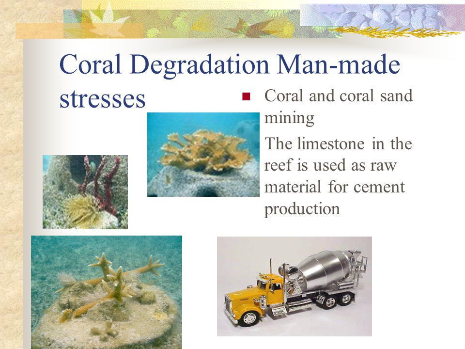 Coral Degradation Man-made stresses Coral and coral sand mining The limestone in the reef is used as raw material for cement production