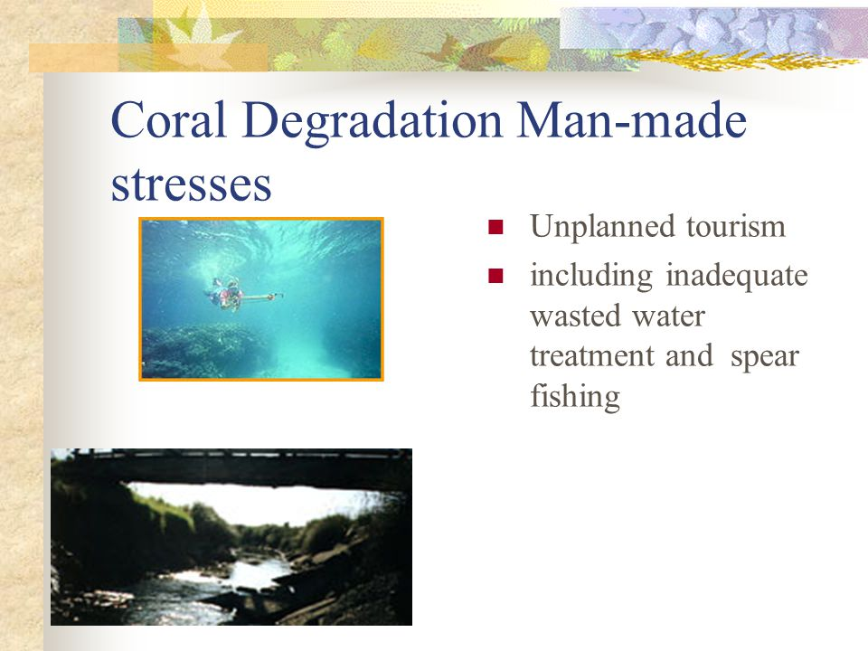 Coral Degradation Man-made stresses Unplanned tourism including inadequate wasted water treatment and spear fishing
