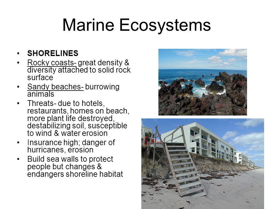Marine Ecosystems SHORELINES Rocky coasts- great density & diversity attached to solid rock surface Sandy beaches- burrowing animals Threats- due to h