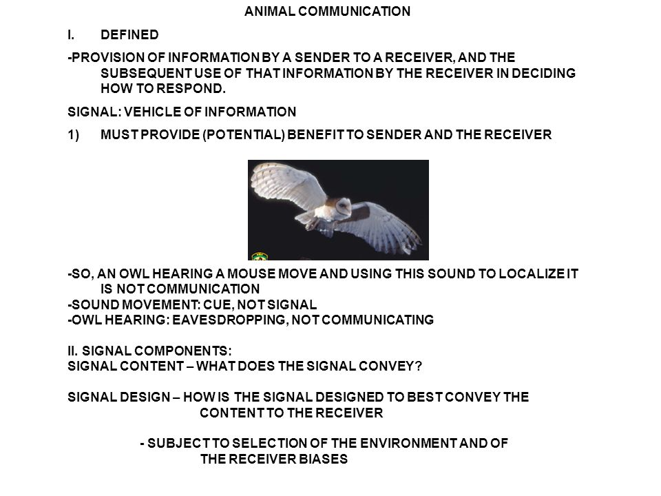 ANIMAL COMMUNICATION I.DEFINED -PROVISION OF INFORMATION BY A SENDER TO A RECEIVER, AND THE SUBSEQUENT USE OF THAT INFORMATION BY THE RECEIVER IN DECIDING HOW TO RESPOND.