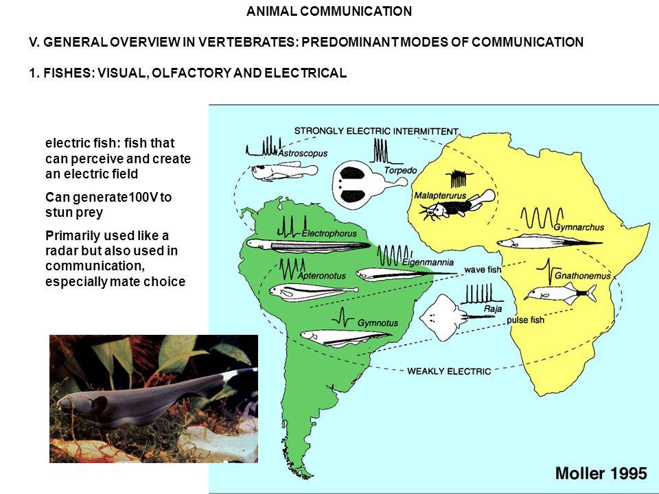 ANIMAL COMMUNICATION V. GENERAL OVERVIEW IN VERTEBRATES: PREDOMINANT MODES OF COMMUNICATION 1.
