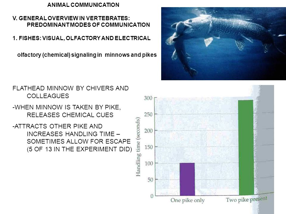 ANIMAL COMMUNICATION V. GENERAL OVERVIEW IN VERTEBRATES: PREDOMINANT MODES OF COMMUNICATION 1.