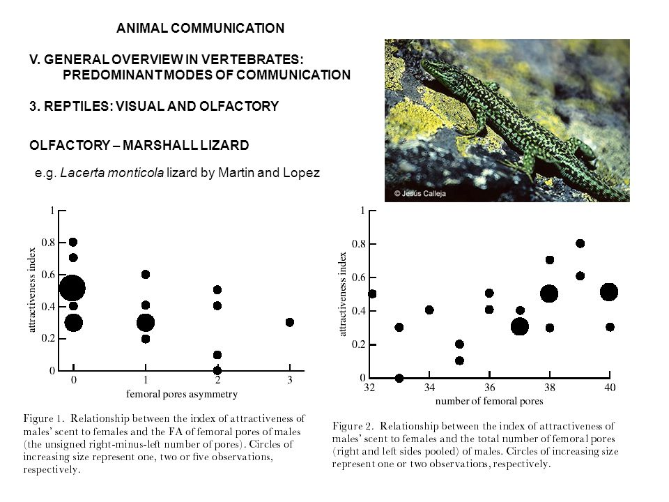 ANIMAL COMMUNICATION V. GENERAL OVERVIEW IN VERTEBRATES: PREDOMINANT MODES OF COMMUNICATION 3.