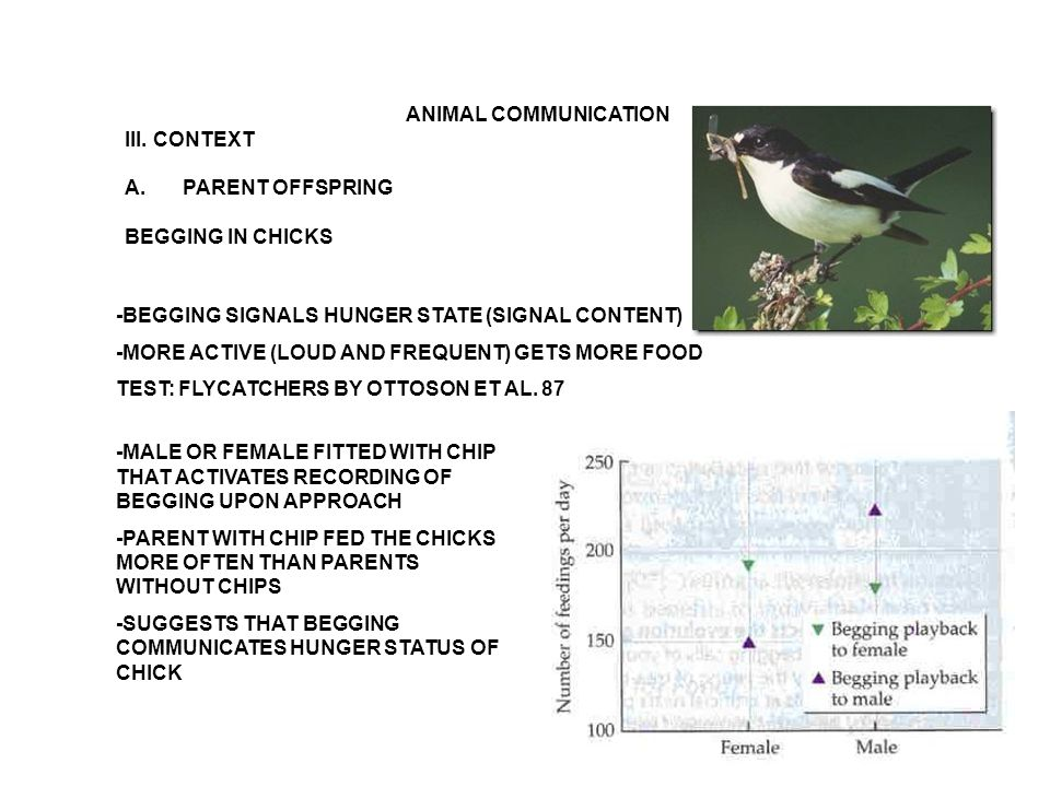 ANIMAL COMMUNICATION III. CONTEXT A.