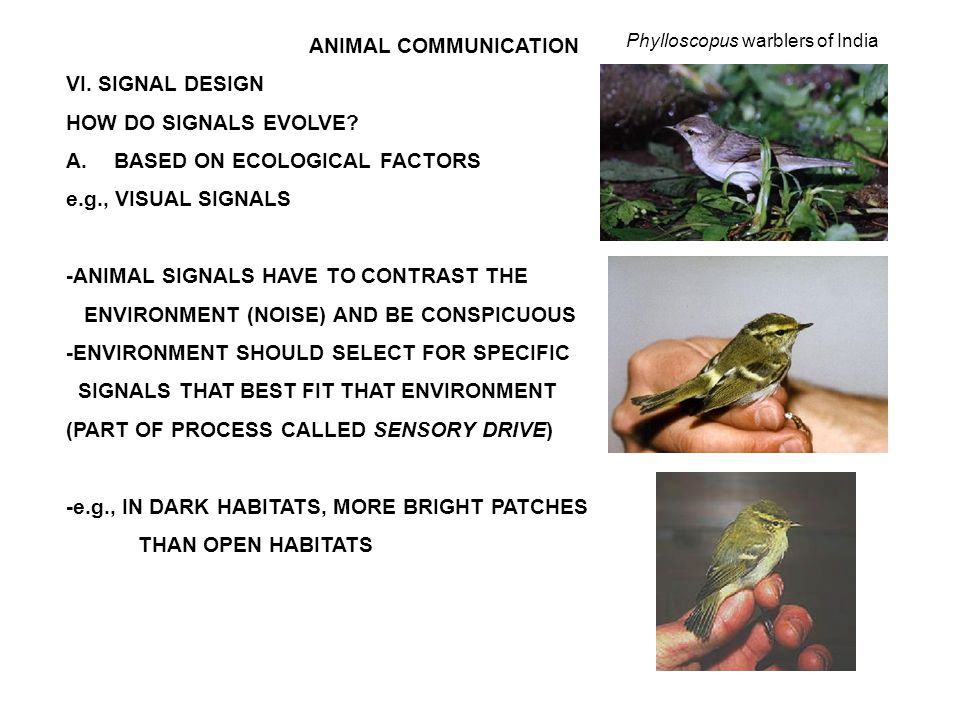 ANIMAL COMMUNICATION VI. SIGNAL DESIGN HOW DO SIGNALS EVOLVE.