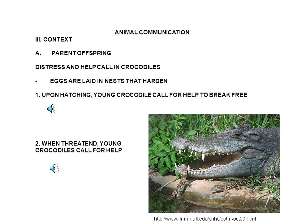 ANIMAL COMMUNICATION III.CONTEXT B.