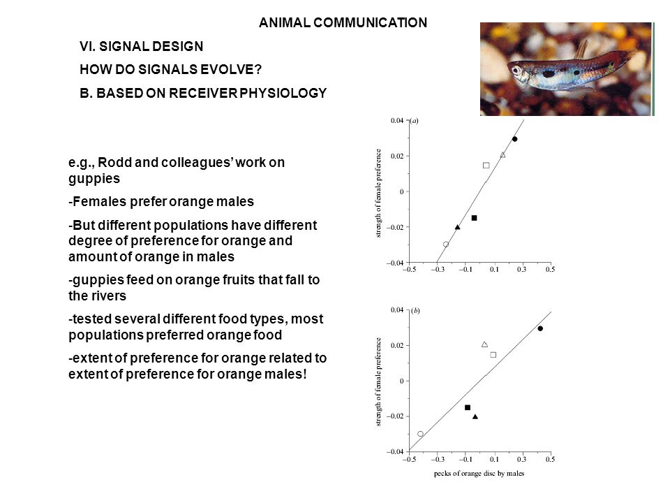ANIMAL COMMUNICATION VI. SIGNAL DESIGN HOW DO SIGNALS EVOLVE.
