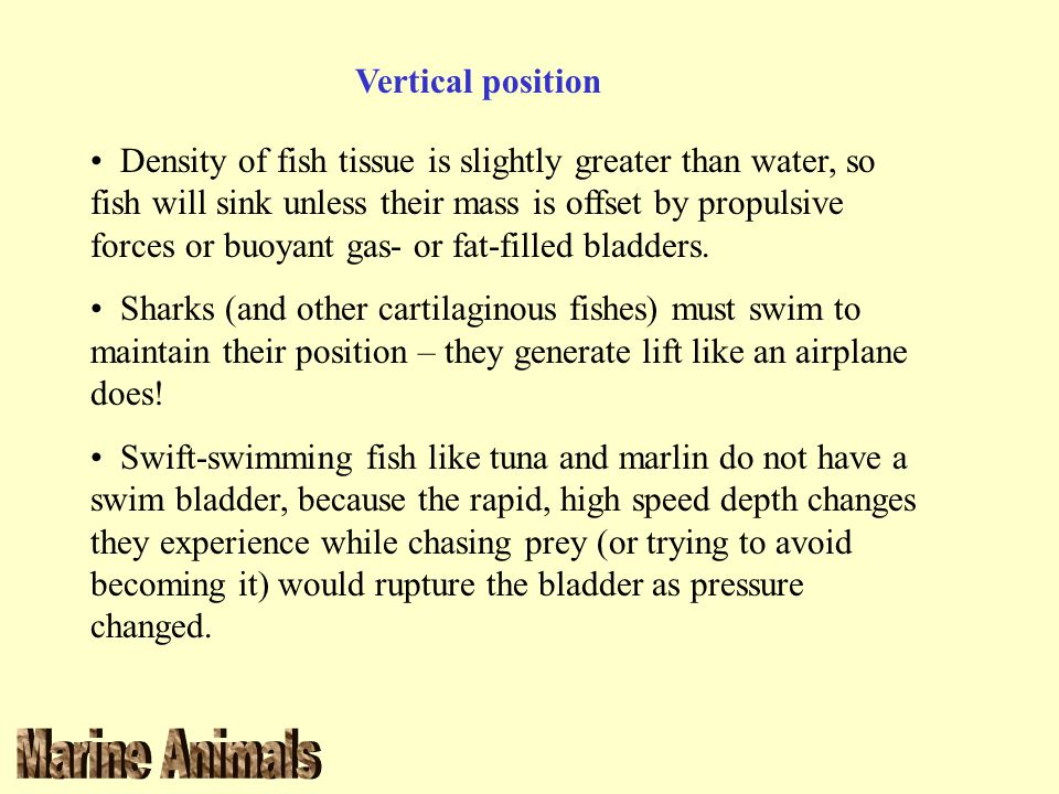 Vertical position Density of fish tissue is slightly greater than water, so fish will sink unless their mass is offset by propulsive forces or buoyant