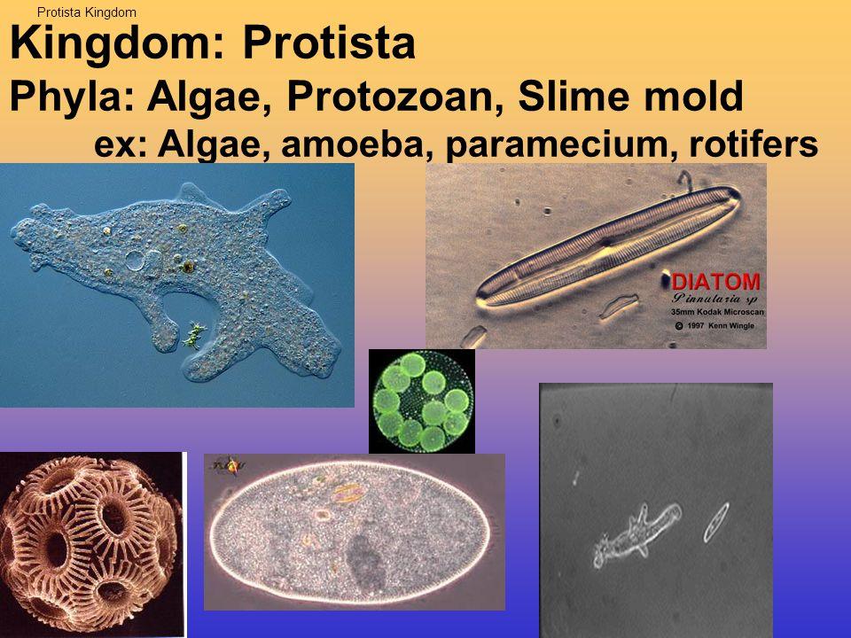 5 kingdoms Kingdom: Protista ex: Algae, amoeba, paramecium