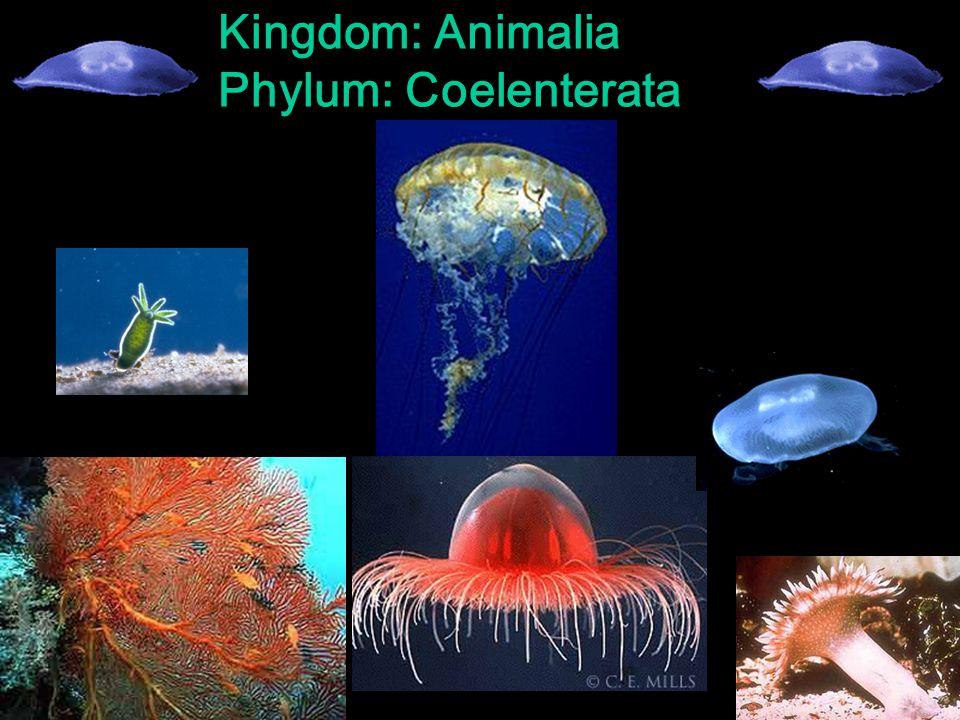 Figure Vertebrates Invertebrates